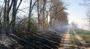 В Курской области из-за жары введут особый пожароопасный режим