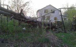 В Липецке пострадал газопровод, на трубу рухнуло дерево