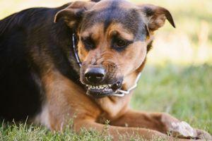 В Белгородской области выявлено бешенство дворовых собак