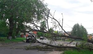 В Курске из-за сильного ветра падали деревья на дорогу