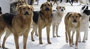 Жительница Липецка требует отловить бездомных собак
