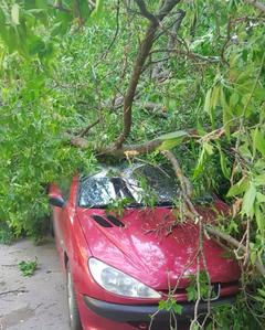 В центре Курска обрушилось дерево на два автомобиля