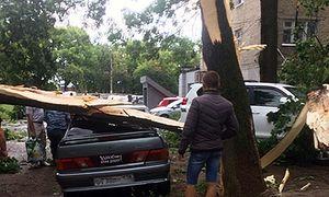 Рухнувшее дерево помяло две машины в Курске
