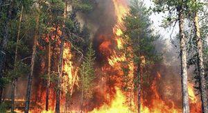 В Курской области ожидают повышения класса пожарной опасности
