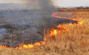Штраф в 300 тысяч рублей присудили белгородцу за пал травы