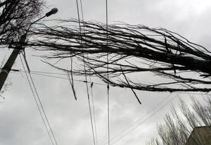 В Липецке жуткий ветер повалил на трамвайные провода дерево