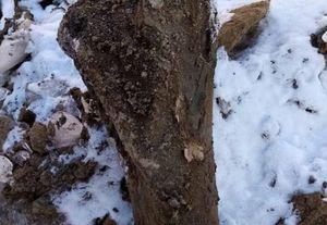 Кости древнего мамонта обнаружили на проспекте Притомском в Кемерове