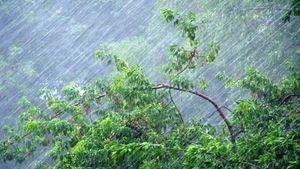 В Липецкой области дожди с грозами и сильный ветер, до +22˚С