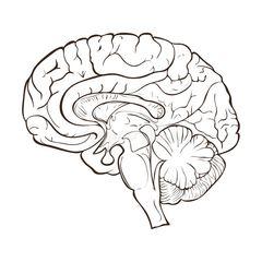UCL: Мозг человека воспринял шестой протез пальца руки за свой собственный орган