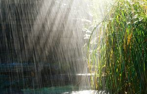 В Белгороде и области ночью дожди и грозы, днем потеплеет до +27 градусов