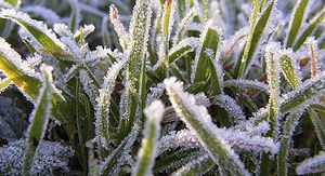 Резкое похолодание и заморозки ожидаются в Нижегородской области в начале июня