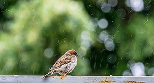 В Курской области ожидаются дожди с грозами и до 28 градусов тепла 28 мая
