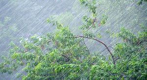 Шквалистый ветер и ливни с градом ожидаются в Ростовской области с 1 по 3 июня