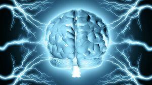 Матосом выявлено 13 442 общих белка между мозгом и мошонкой