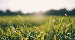 В Курске обещают до +25 градусов и дожди во вторник 15 июня