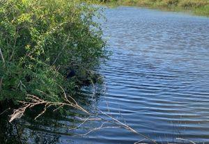Тело пропавшего неделю назад мужчины нашли в реке в Саратовской области