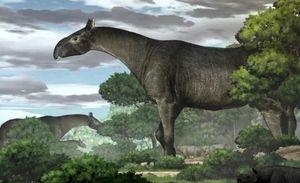 В Китае обнаружены останки носорога, жившего 26 млн лет назад