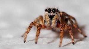 Исследование лапок пауков помогло ученым создать мощный клей