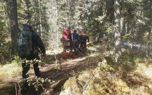 При нападении медведя на туристов в Красноярском крае погиб подросток
