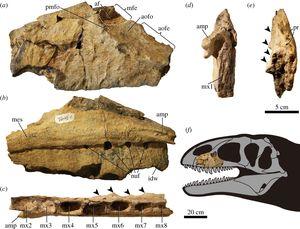 В пустыне Кызылкум палеонтологи обнаружили останки «царя динозавров»