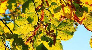 В Курской области ожидается до 23 градусов тепла 14 сентября