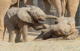 На пляже Испании обнаружены древние отпечатки следов новорожденных слонов вымершего вида