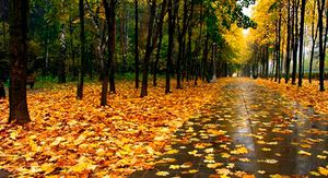 В Курской области ожидается до +15 градусов и дожди с грозами 20 сентября