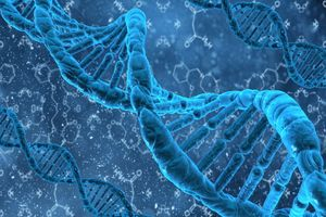 Биологи открыли 14 генов, вызывающих ожирение, и 3 гена, предотвращающие его