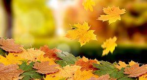 В Курской области ожидается до +13 градусов 29 сентября