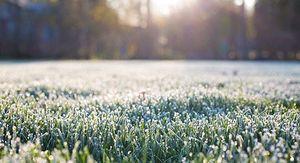 Заморозки до -2 градусов прогнозируют в Курской области 6 октября
